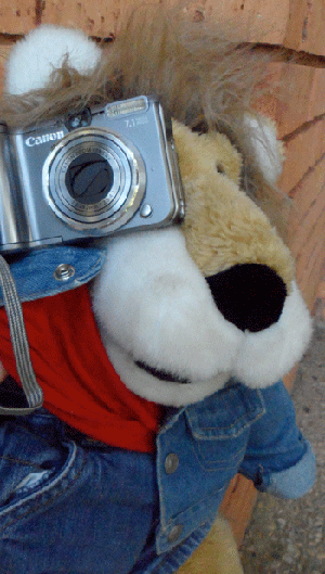 Spike and hhis camera